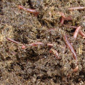 trại trùn quế, dịch trùn promins, phân trùn quế prosoil, phân bón lá bioworm