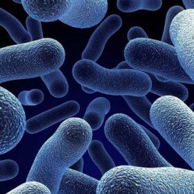 Khả Năng Ức Chế Vibrio Từ Trùn Quế